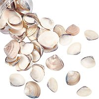 NBEADS About 300g Natural Clam Shell Beads Undrilled Seashell Beads Beach Seashell Charms for DIY Summer Ocean Craft Jewelry Making Wedding Party Home Decor