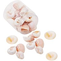 Arricraft 25pcs Snail Sea Shells with Hole Beach Seashells Natural Seashells for Candle Making, Home Decorations, Beach Party Wedding Decor, DIY Crafts, Fish Tank and Vase Fillers