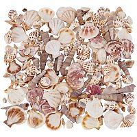 NBEADS 200 Pcs Tiny Natural Seashells Beads, Mixed Ocean Sea Shells Spiral Shell Craft Charms for Fish Tank Home Decorations DIY Crafts