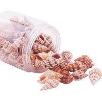 PandaHall Elite Length 14-40mm Spiral Seashells Charms Dyed Beads with Holes for Craft Making, about 50pcs/box