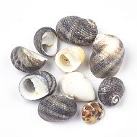 Spiral Shell Beads, Gray, 15~35x10~22x8~17mm; about 400pcs/500g