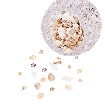 PandaHall Elite Mixed Style Cowrie Cowry Seashells Oval Spiral Shells with Holes for Jewelry Making