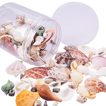 PandaHall Elite Sea Shells Conch Fashion Mixed Beach Seashells for DIY Jewelry Craft Home Decoration, Beach Theme Party Wedding Decor, Fish Tank and Vase Fillers