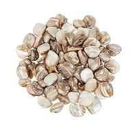 Natural Freshwater Shell Beads, Chip, Light Khaki, 18~22x15~21x7.5~10mm, Hole: 0.8mm, 250g/box