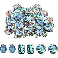Natural Abalone Shell/Paua Shell Cabochons, with Freshwater Shell, Mixed Shapes, Colorful, 3 shapes, 6pcs/shape, 18pcs/box