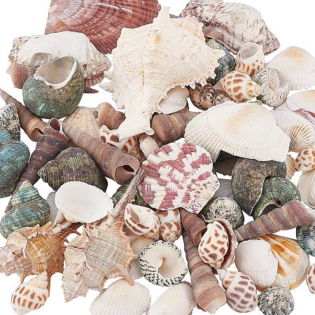 PandaHall Elite 330g Mixed Shape Undrilled Sea Shell Beads No Hole Scallop Sea Shells Natural Ocean Beach Clam Seashells Craft Charms for Home Party Wedding Decoration Fish Tank Vase Filler