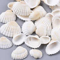 Natural Shell Beads, Undrilled/No Hole Beads, Seashell Color, 12~27x15~35x5~12mm, 300g/box