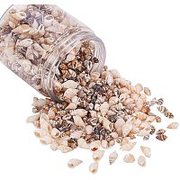 Spiral Shell Beads, No Hole, Mixed Color, 7.2x8cm; about 140g/box