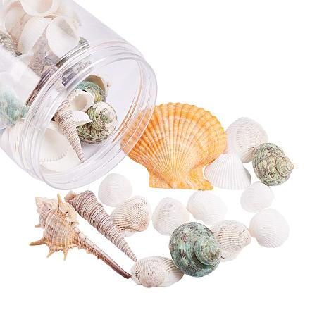 PandaHall Elite 70 pcs Mixed Shape Undrilled Sea Shell Beads No Hole Scallop Sea Shells Natural Ocean Beach Clam Seashells Craft Charms for Home Party Wedding Decoration Fish Tank Vase Filler