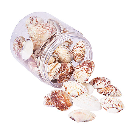 PandaHall Elite 1Box About 35-40Pcs Scallop Seashells Clam Shell Dyed Beads with Holes for Craft Making Home Deco 32-37mm Length Lemon Chiffon