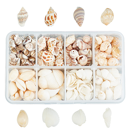 SUPERFINDINGS Natural Conch Shell Beads, Undrilled/No Hole Beads, Mixed Color, 244pcs/box
